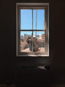 Best Window Cleaning Company Houston