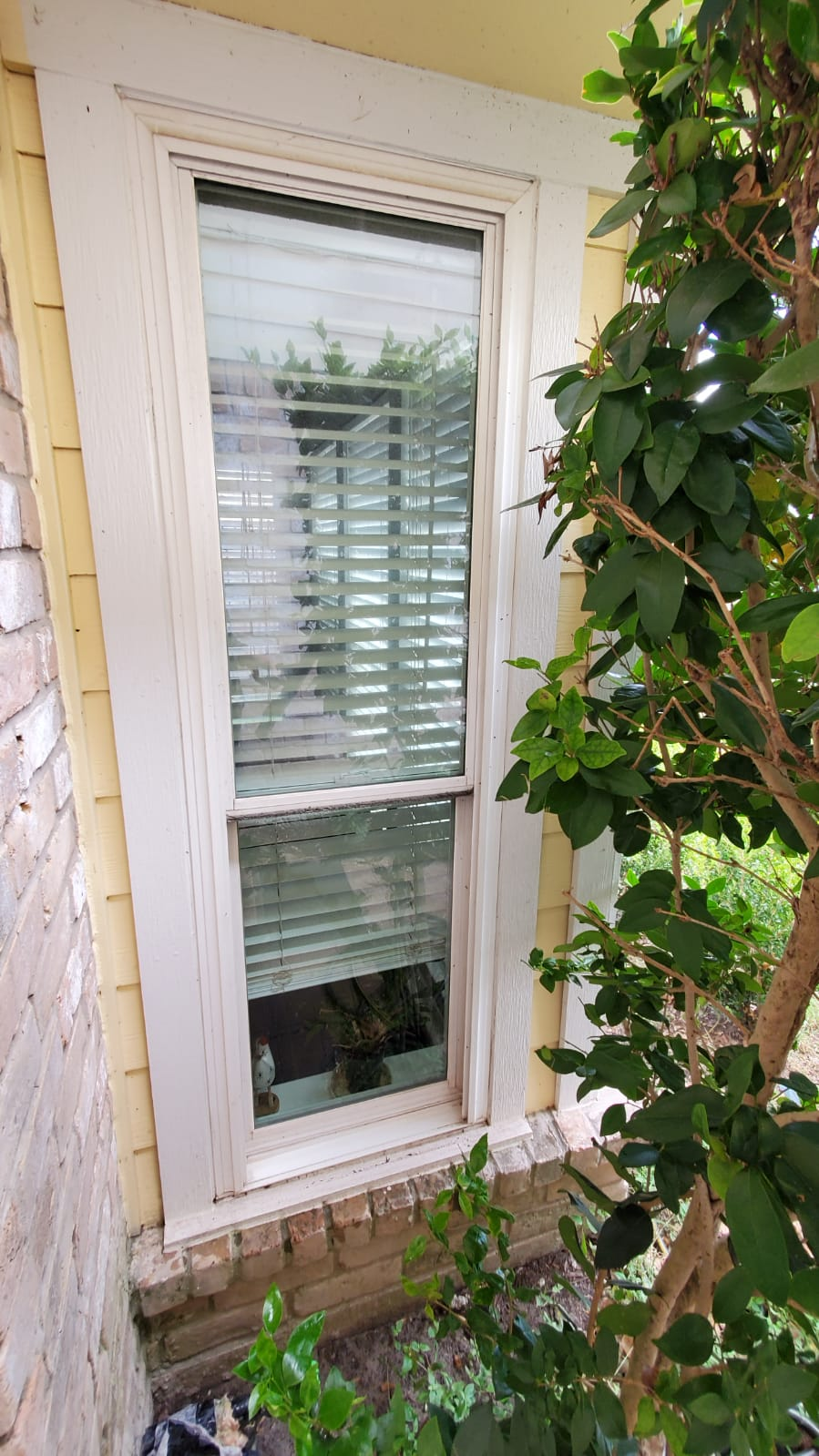 Clean and Sanitize Windows in Houston