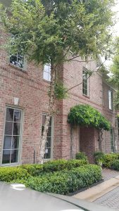 Window Cleaning Services Near Me Houston